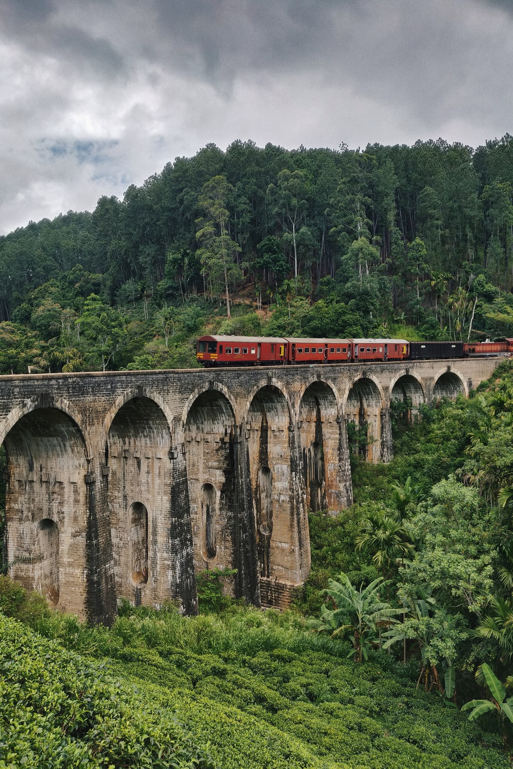 train on bridge in forest