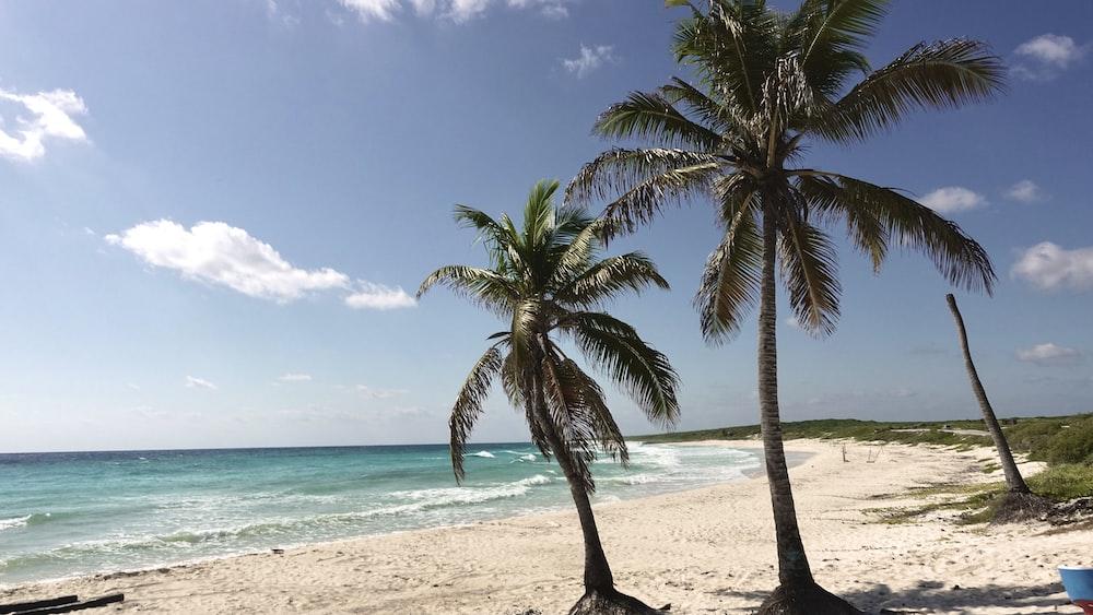 green palm trees on seashore