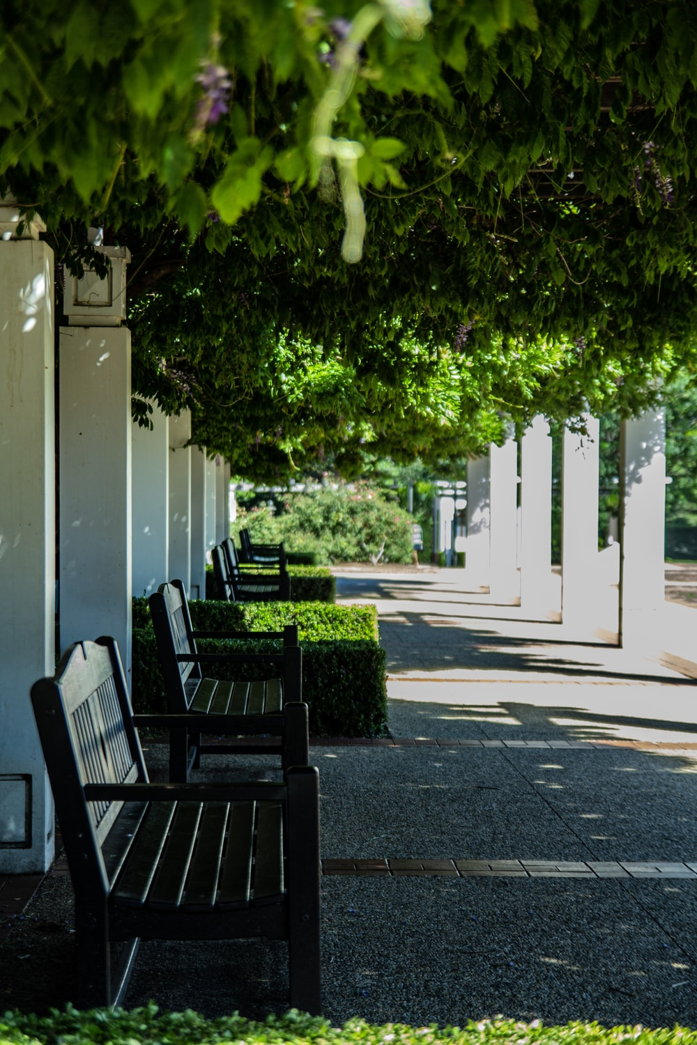 two black wooden benches under trees