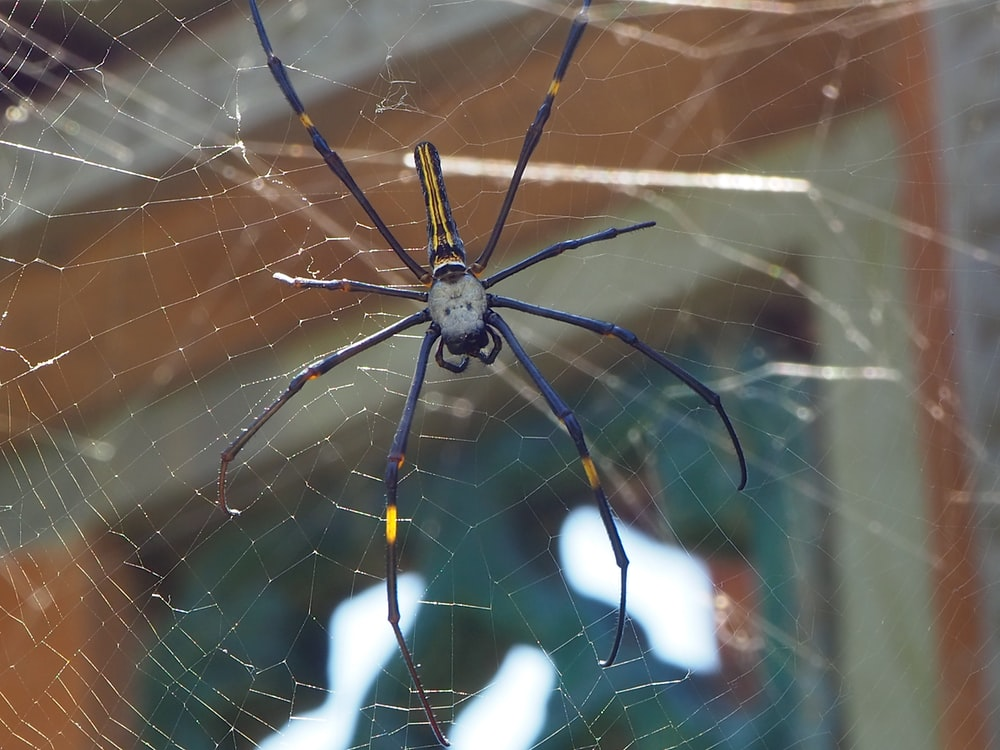 selective focus photography of gray and black spider on spiderweb during daytime