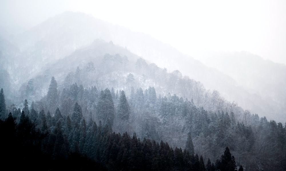 aerial photography of forest in foggy day