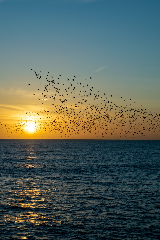 flock of soaring birds on body of water