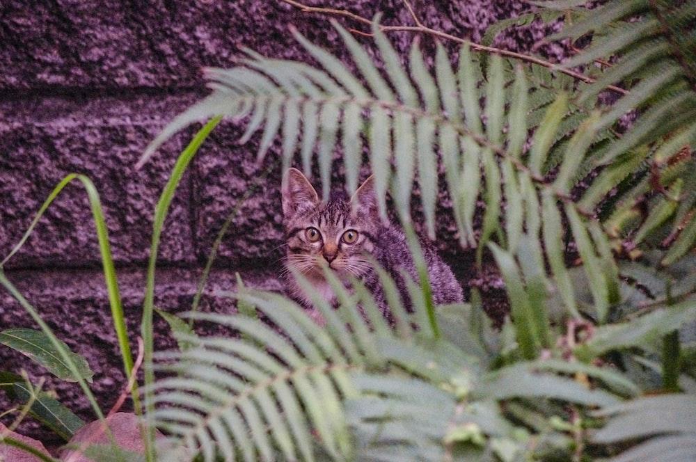 brown tabby cat near green fern plant