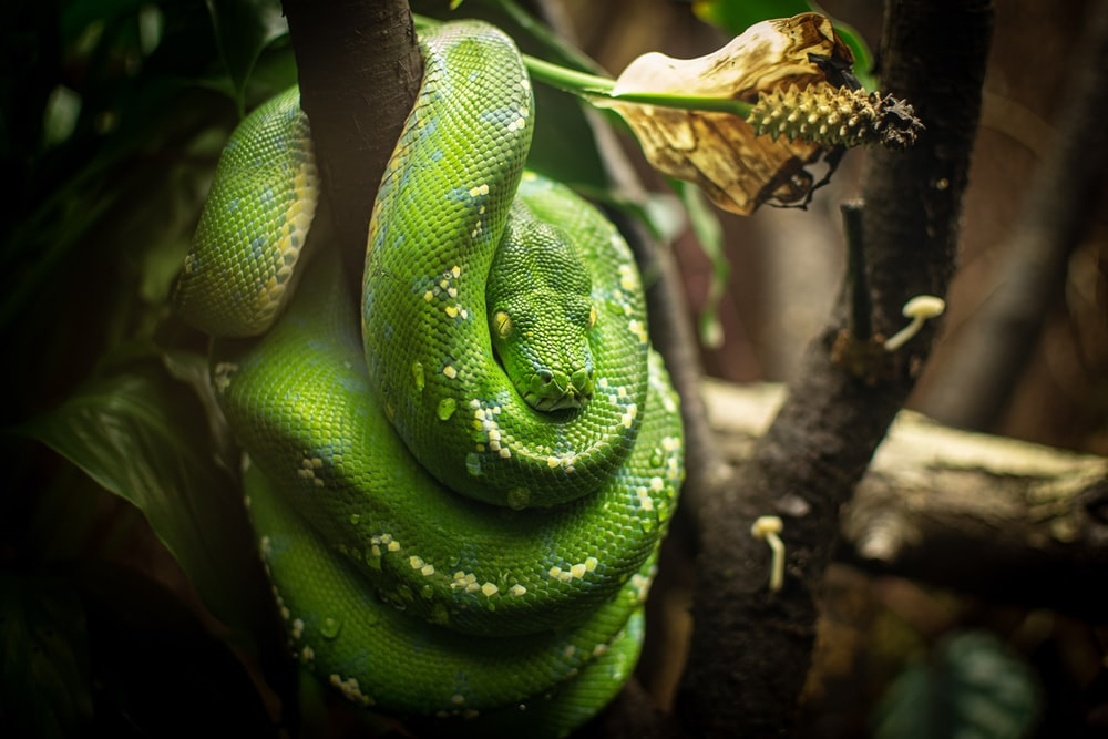 green snake on the tree