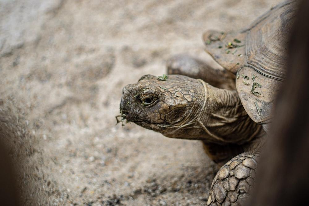 brown turtle on dirt ground