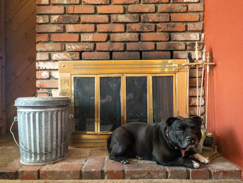 gray tin trash can beside lying dog and fireplace