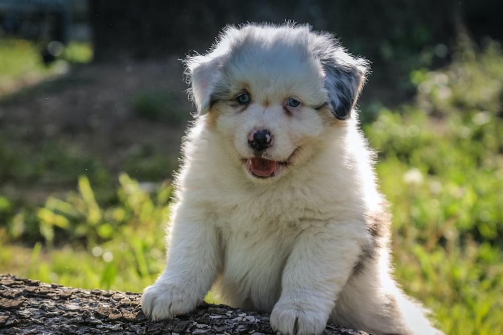 white puppy on log