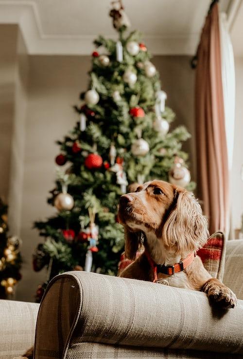 mascotas árbol de navidad
