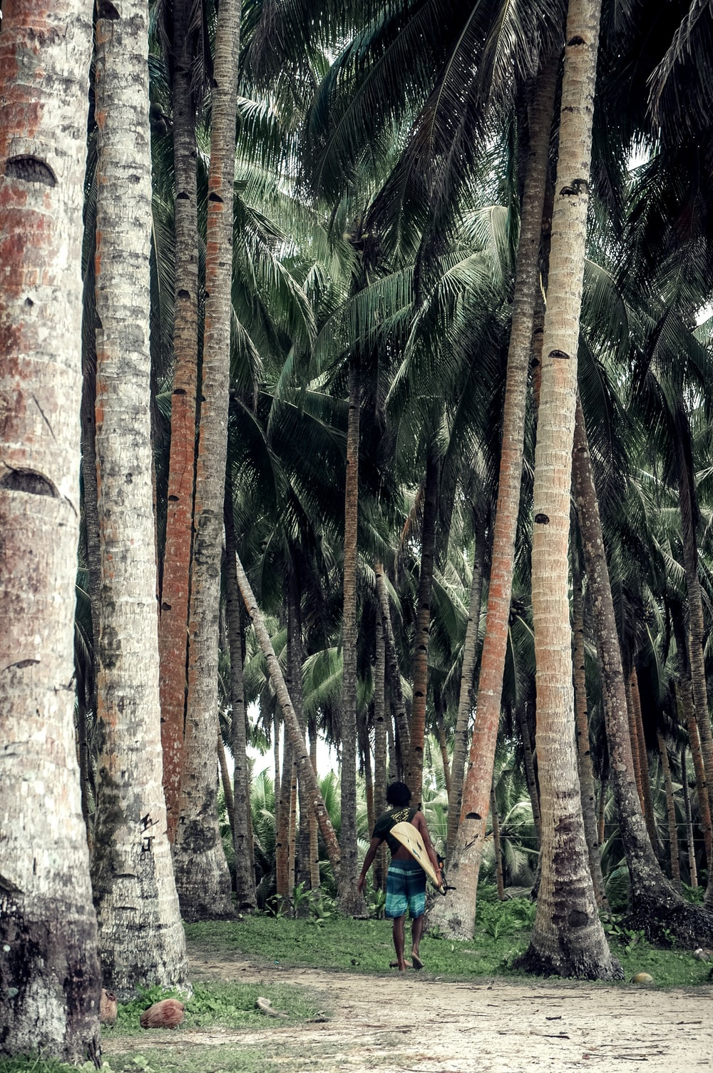 person walking under coconut trees