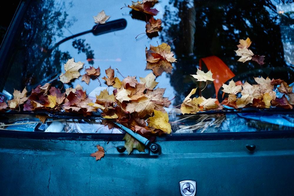 fallen brown leaves on vehicle's windshield