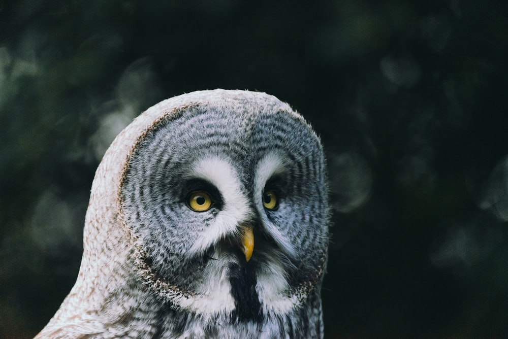 shallow focus photo of gray owl