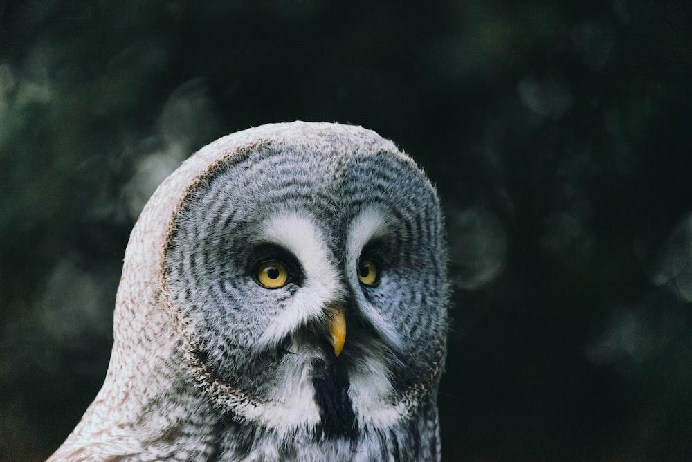 shallow focus photo of gray owl