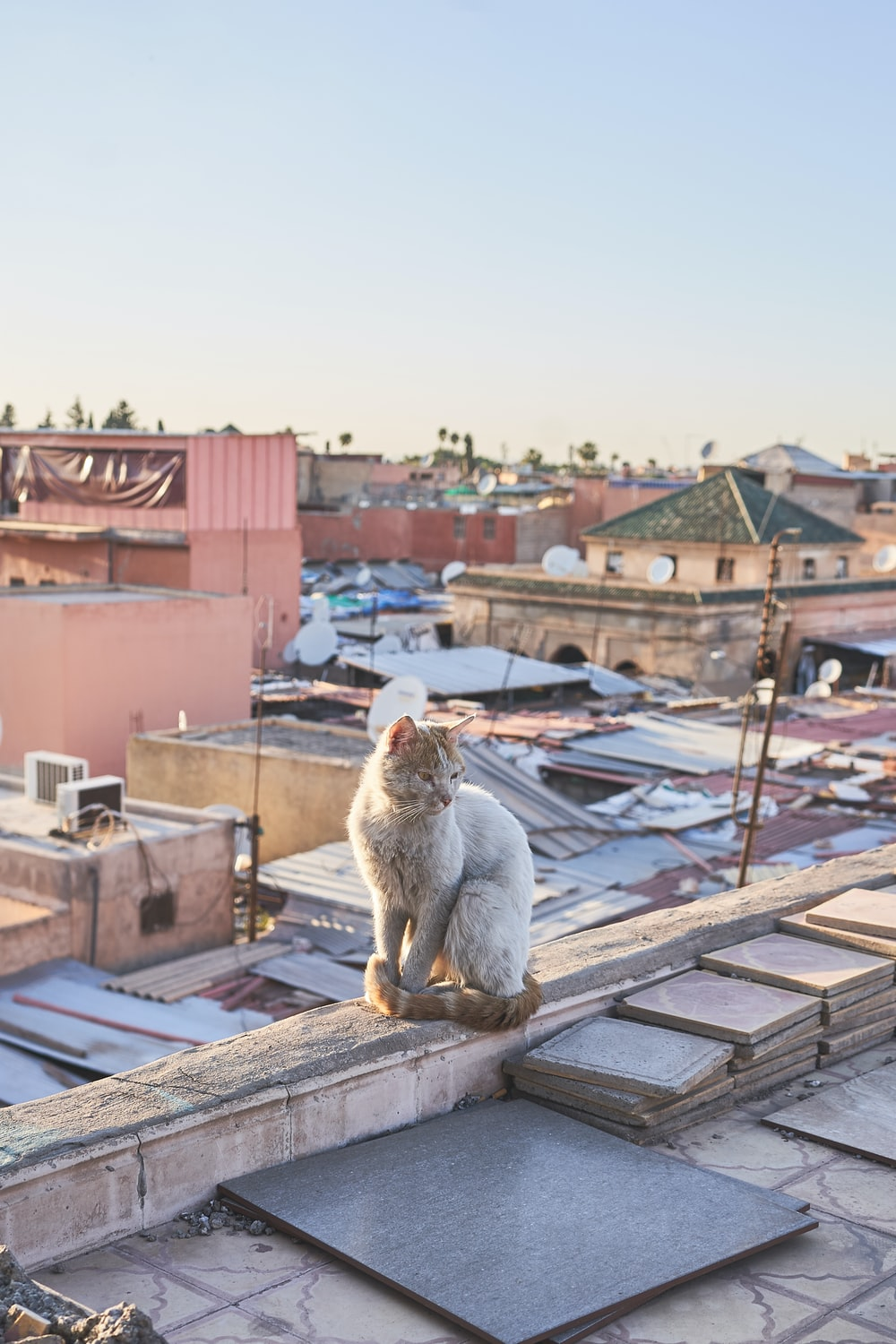 short-fur cat on rooftop during daytime