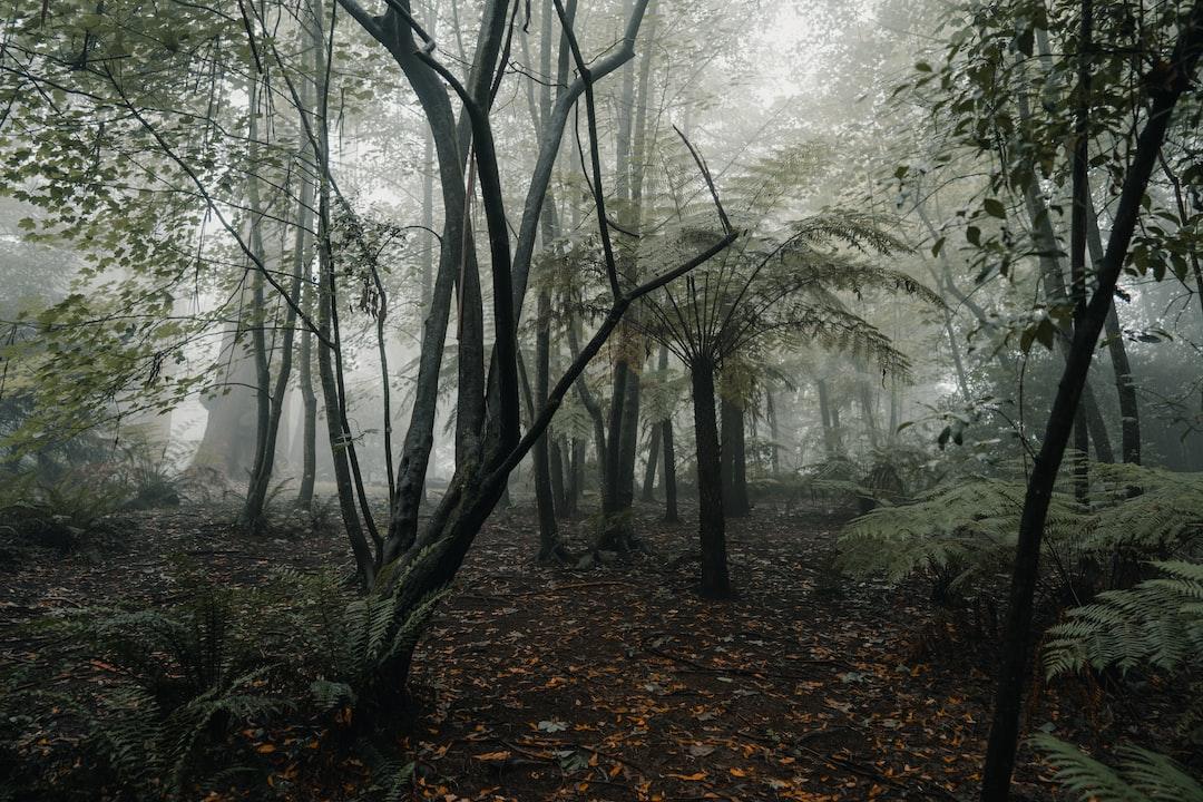 Mood Forest - unsplash