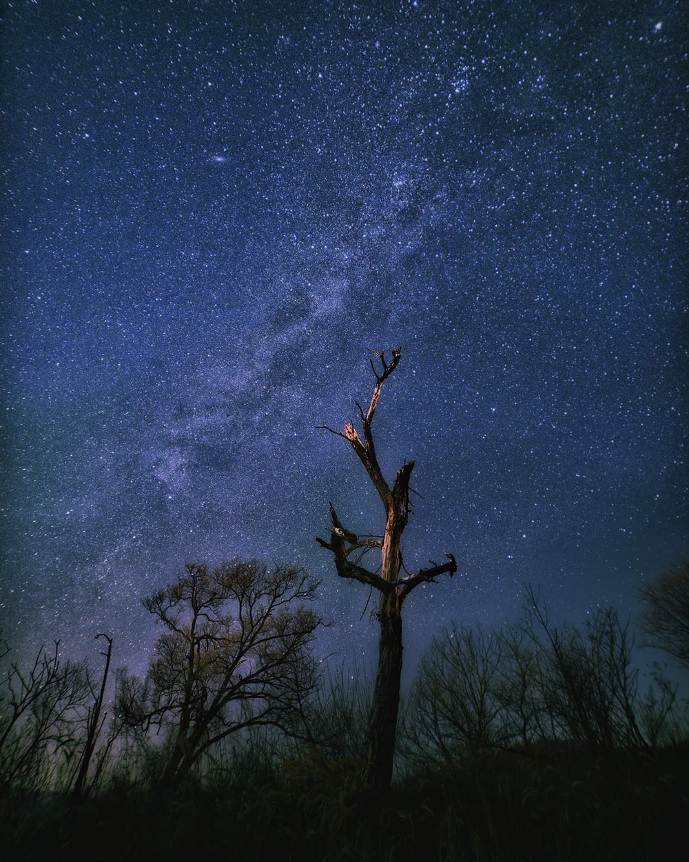 silhouette of trees trees under starry sky