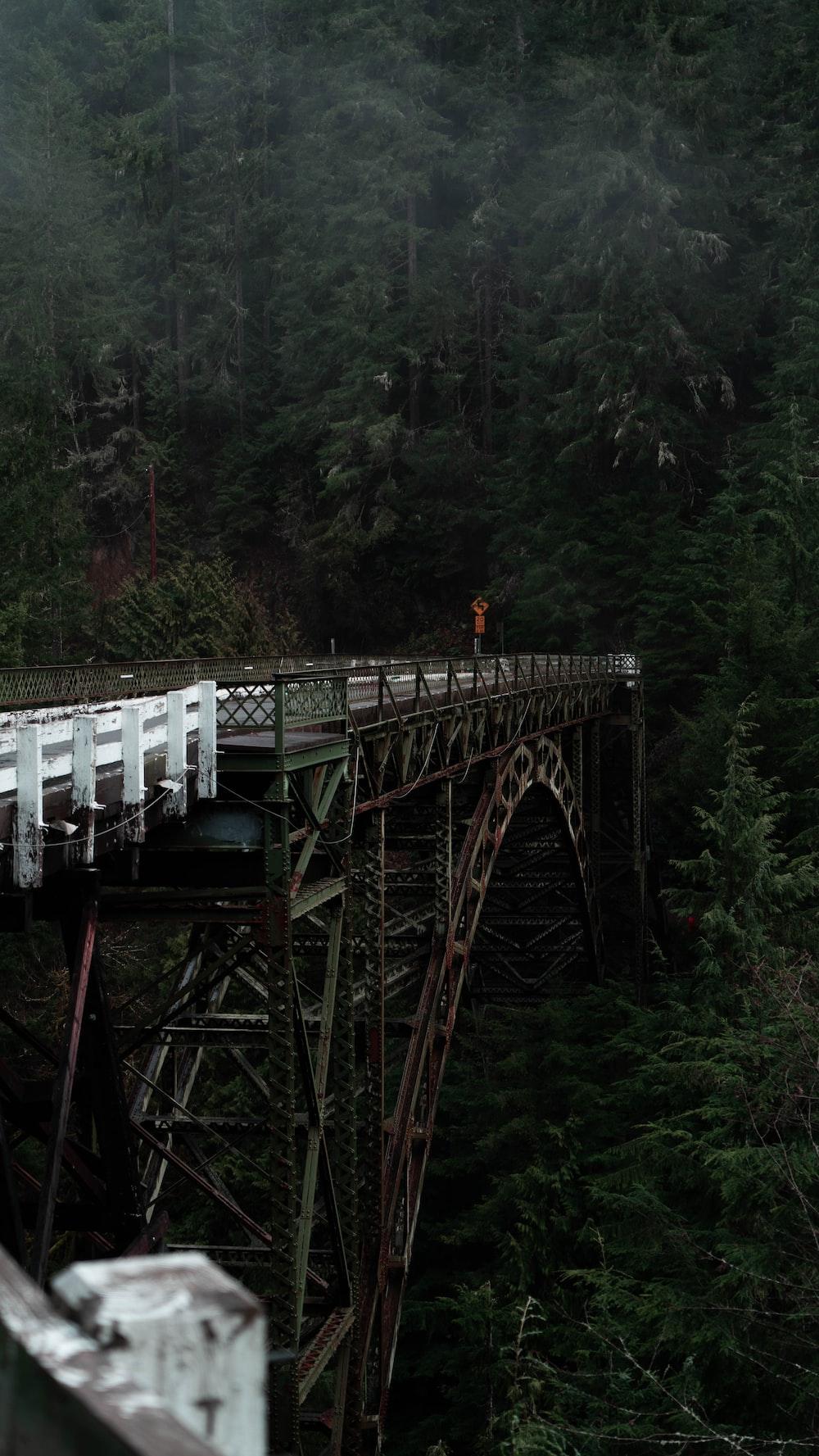 metal arch bridge facing trees