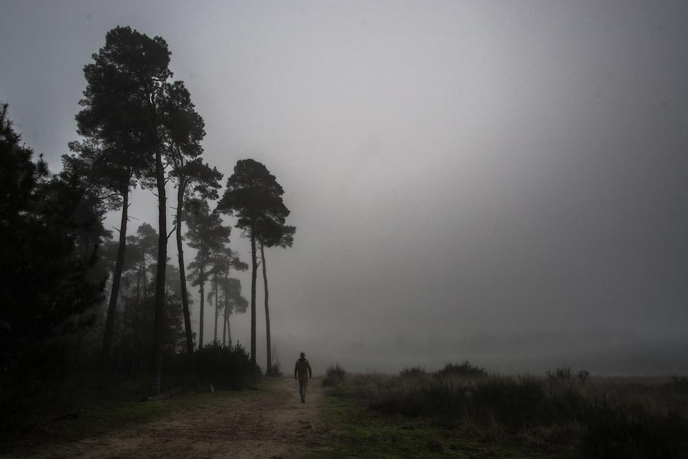 person walking beside green trees