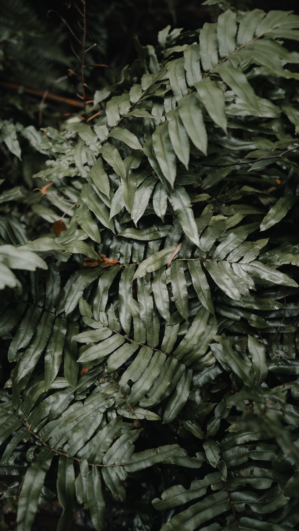 selective focus photography of green-leafed plant