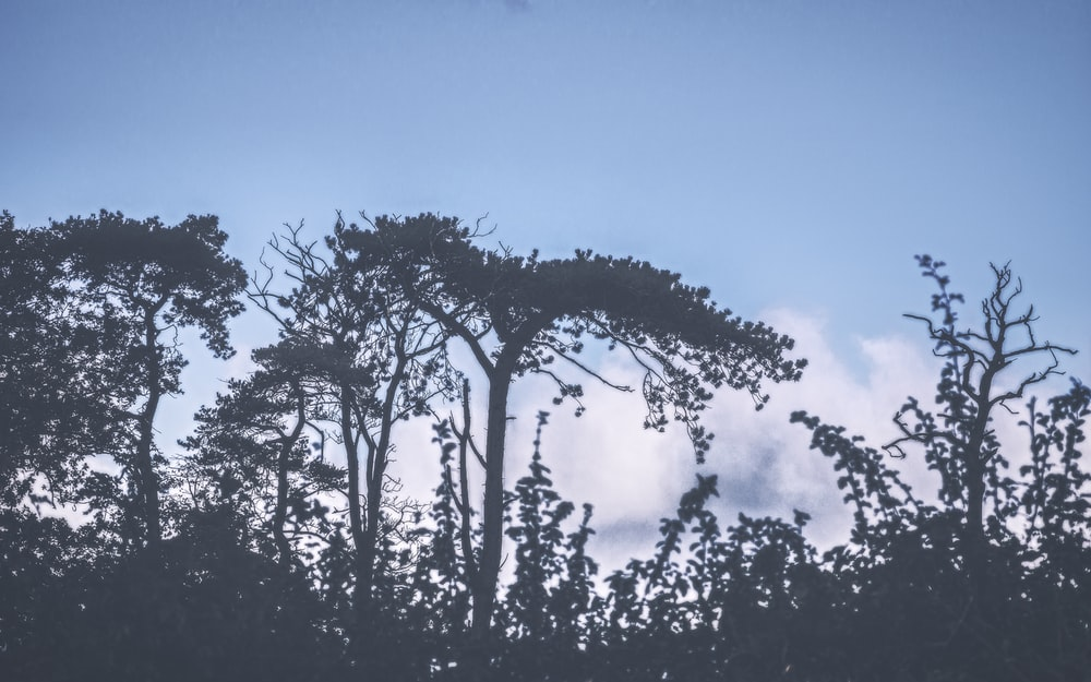 silhouette of trees under blue sky