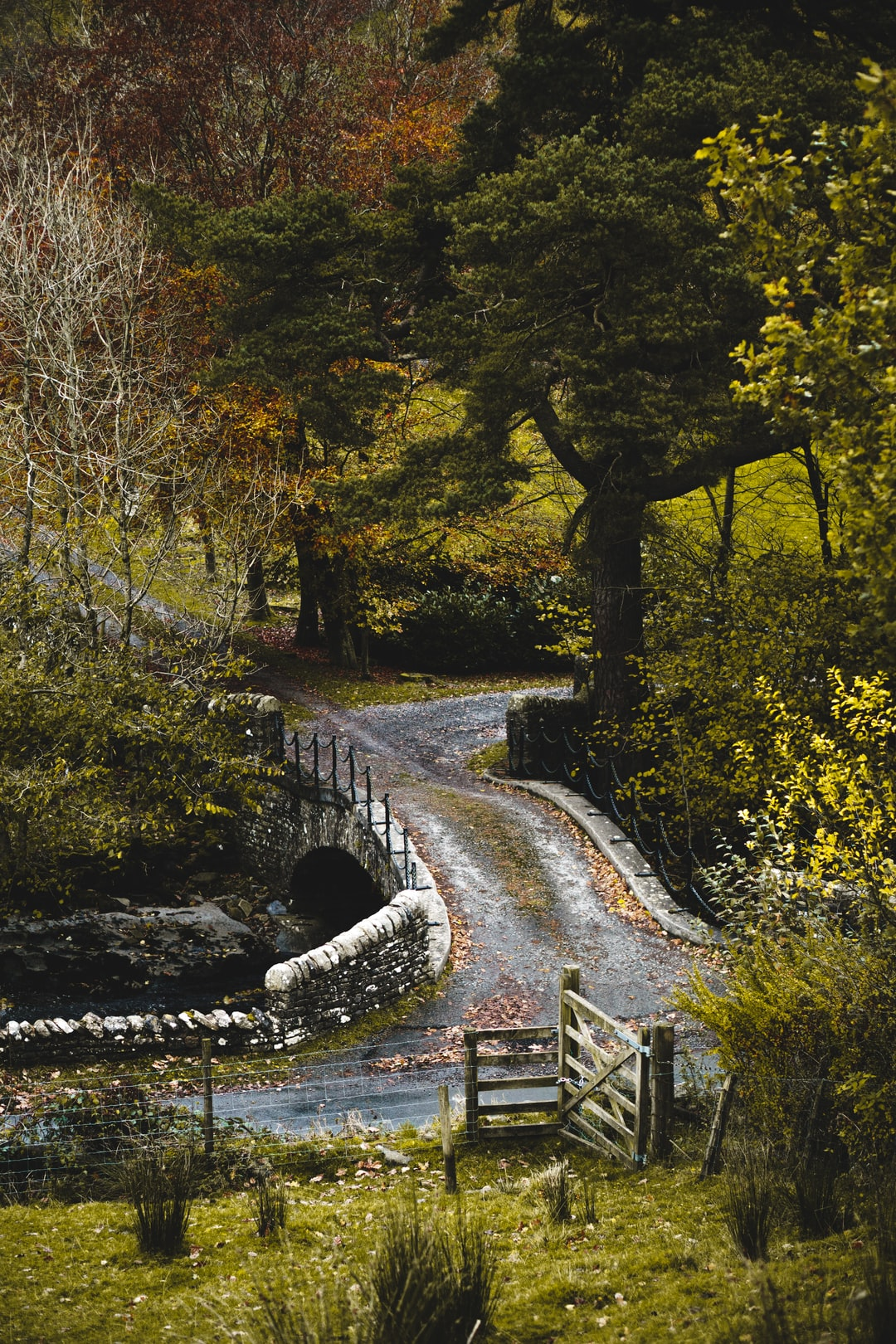 An autumnal country lane in the Yorkshire Dales