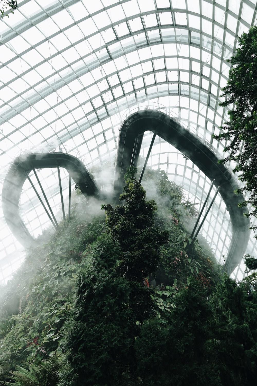 green plants inside building
