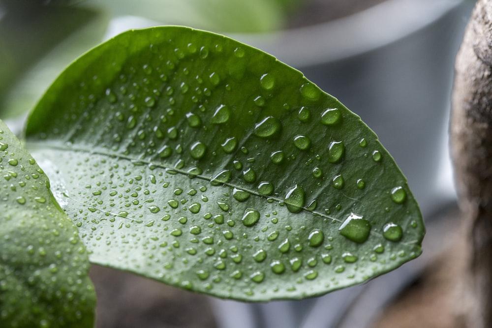 closeup blad met regen