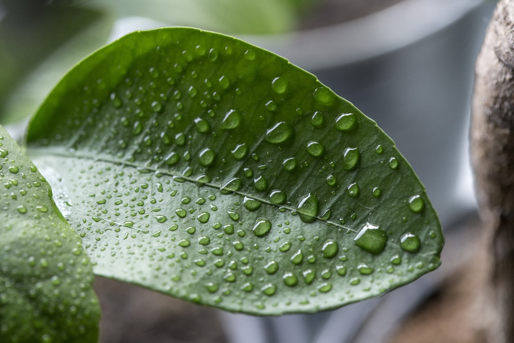 close view of wet leaf