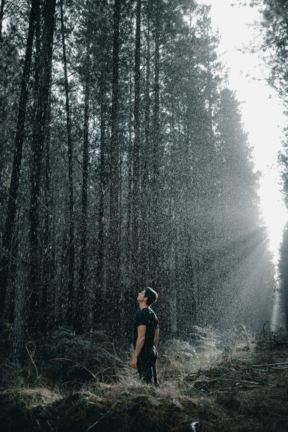 shallow focus photo of man in black T-shirt surrounded by trees during daytime