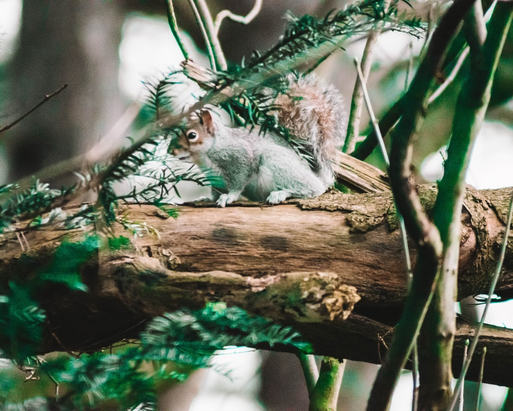 white squirrel on wood