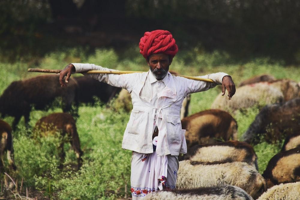 man standing near sheeps