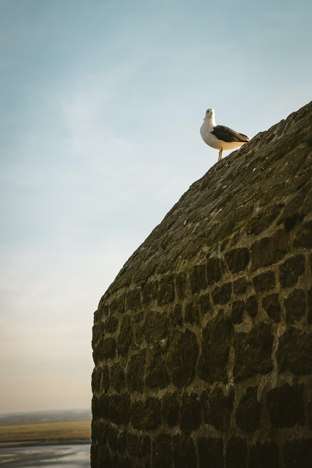 seagull bird on gray stone wall under white and blue sky