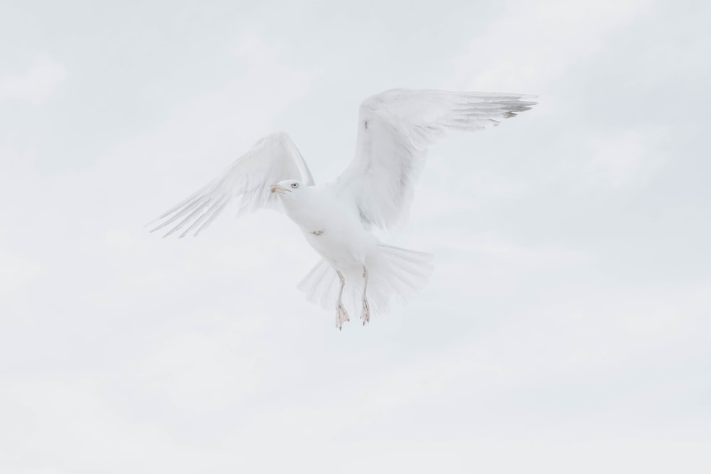 white bird in mid air