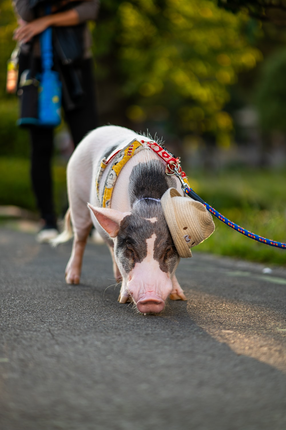 selective focus photography of white and black piglet