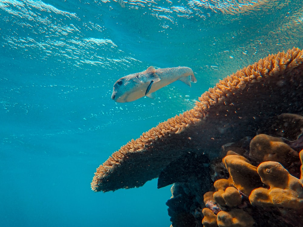 gray fish beside coral in sea