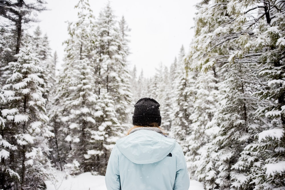 person standing near snow-covered trees
