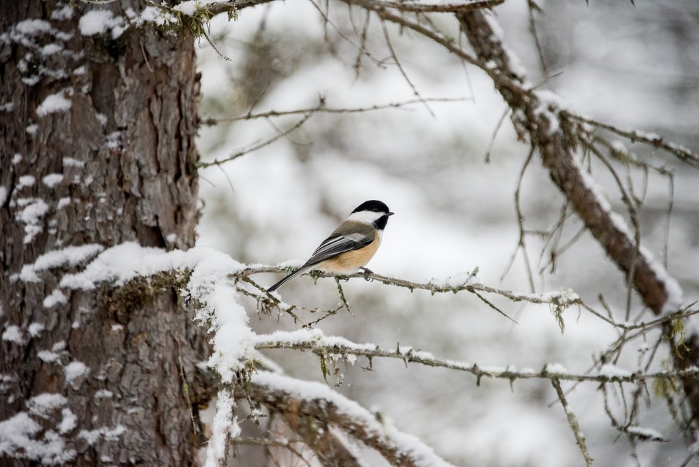 gray and white bird perching on tree branch