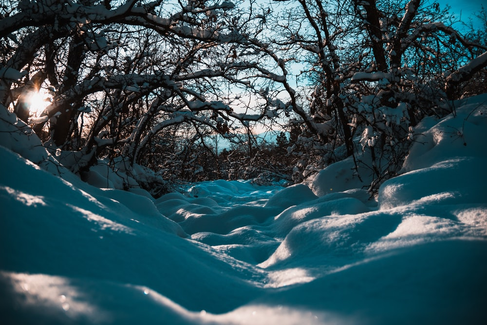 white snow and trees