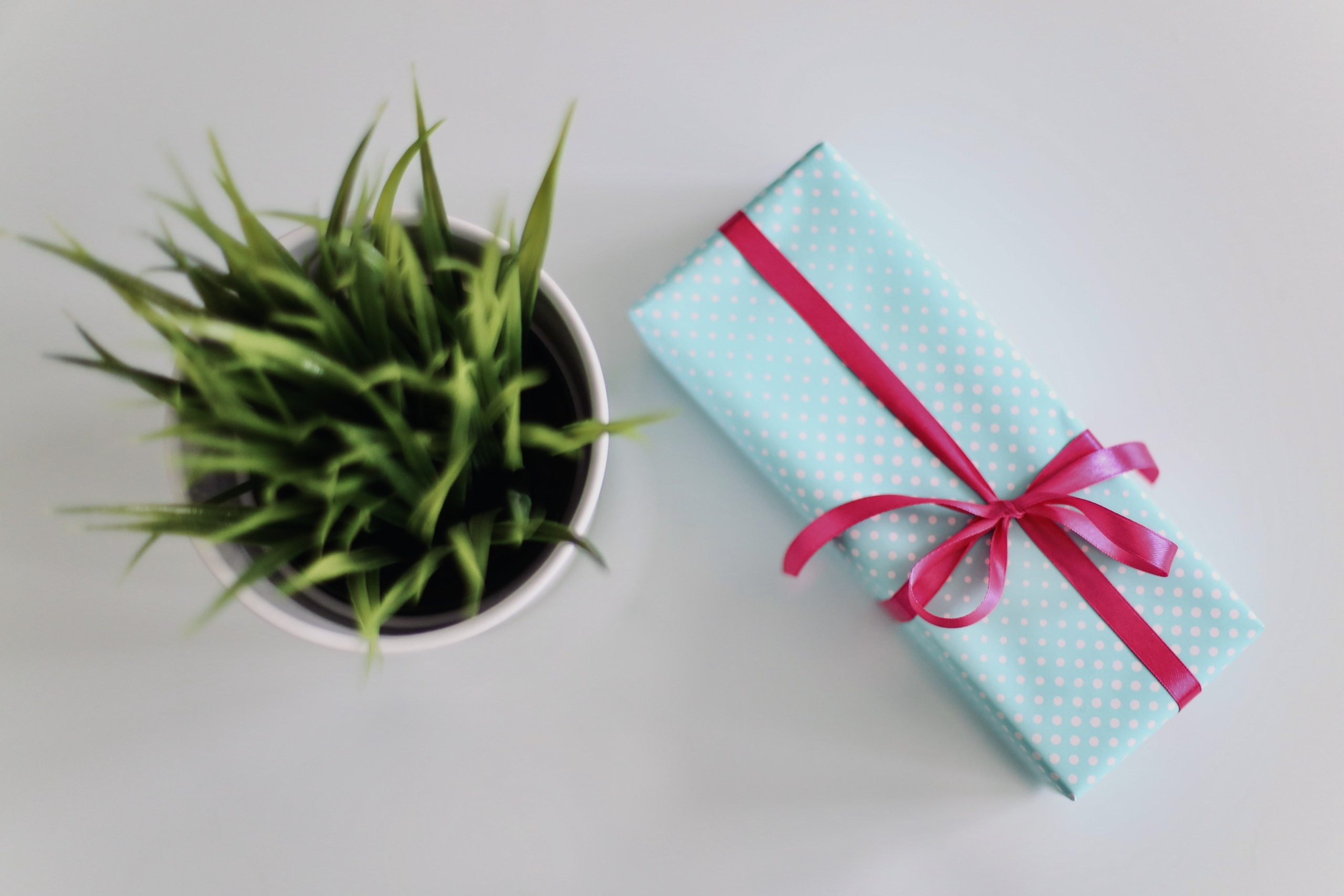 white gift box beside green leafed plant