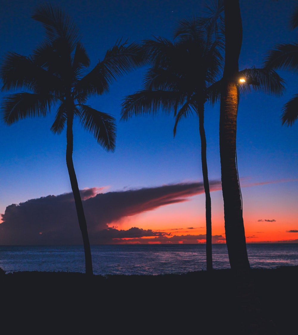 silhouette photography of coconut trees near sea during dawn