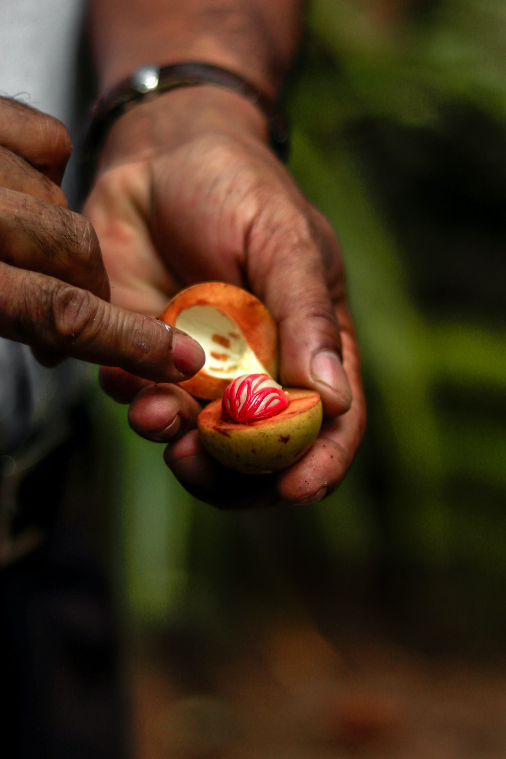 person holding green fruit