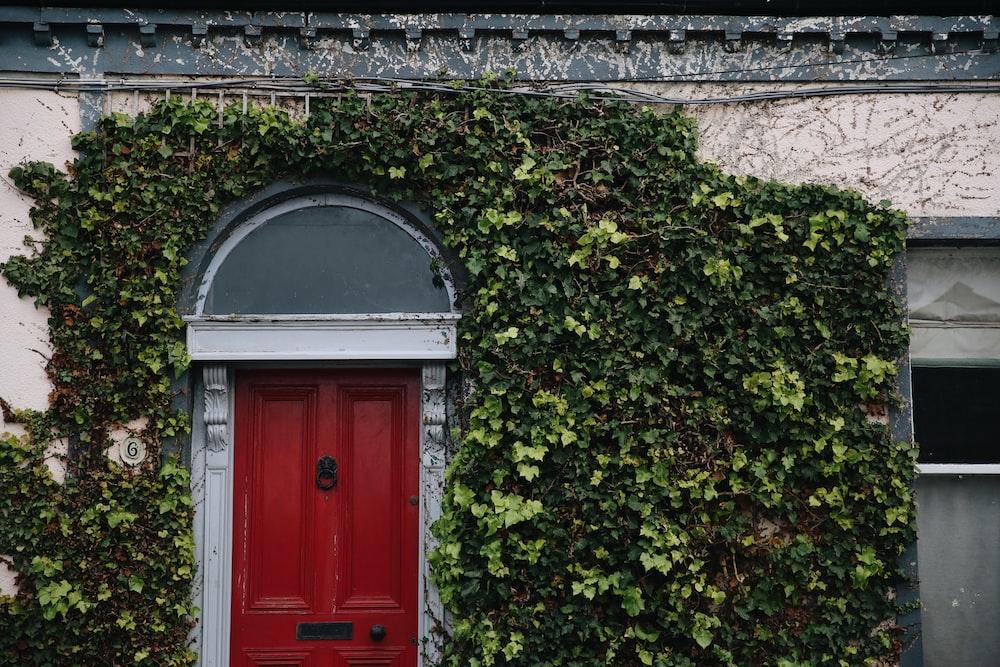 red wooden door covered with green vine plants