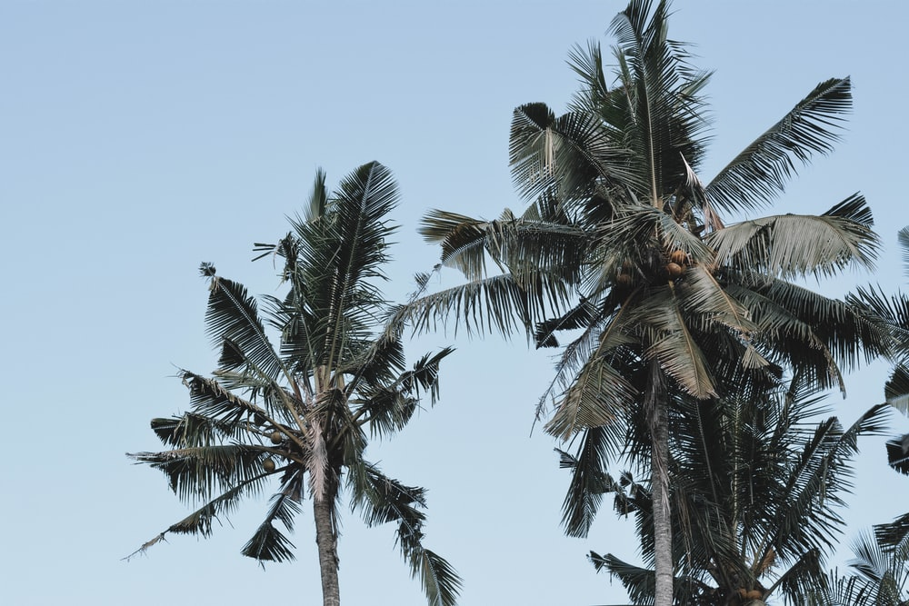 green palm trees during daytime