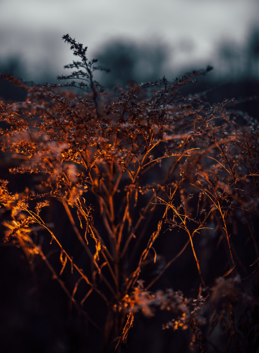 selective focus photography of brown plant at night