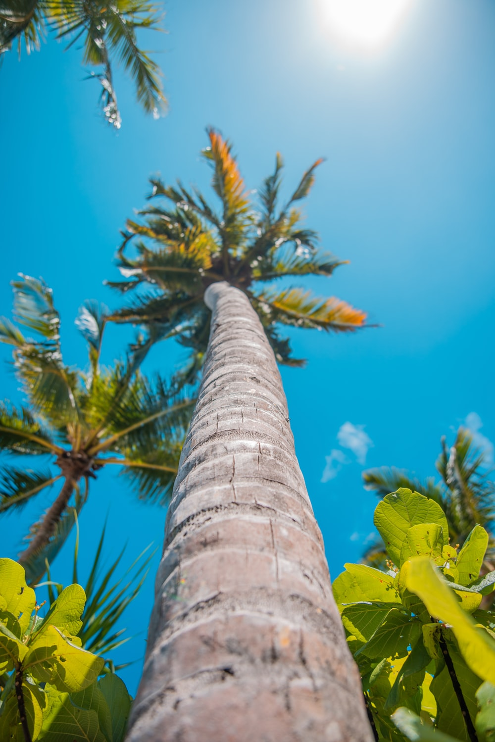 coconut trees under blue sky