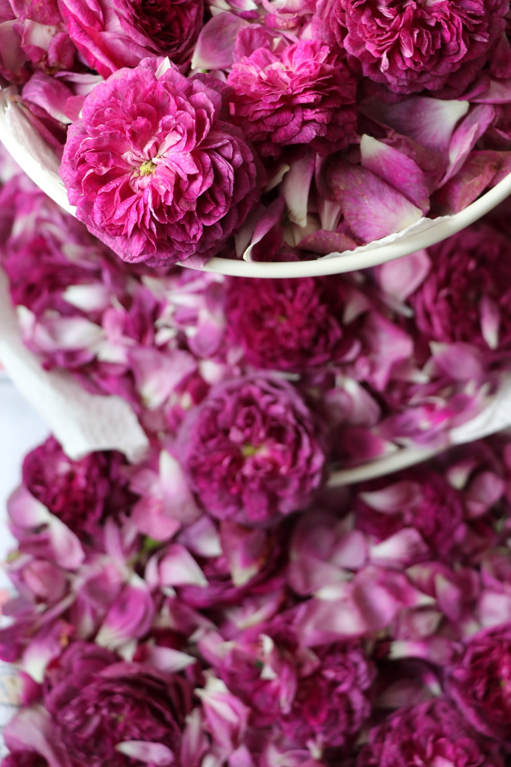 pink flowers on white surface
