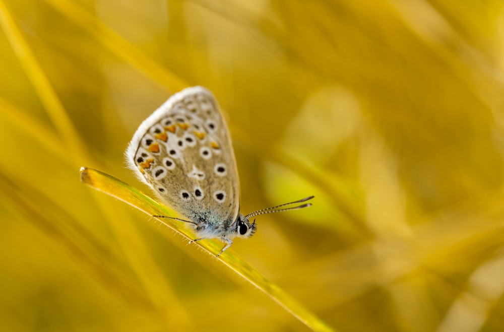 brown butterfly perching on green grass