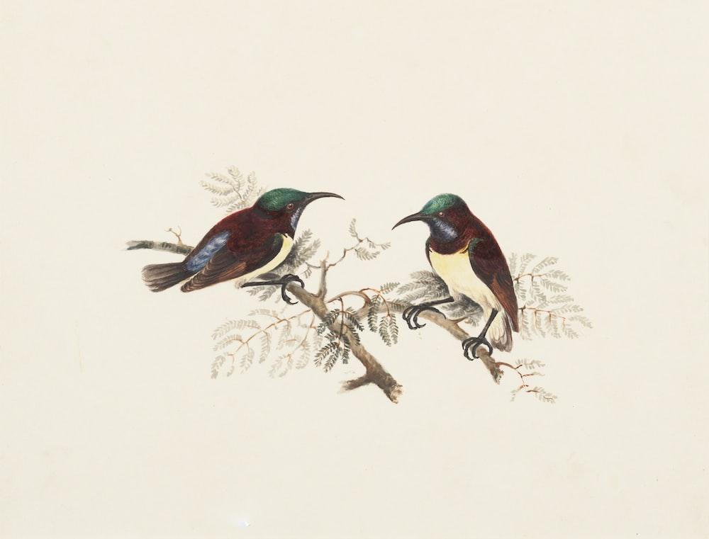 painting of birds\