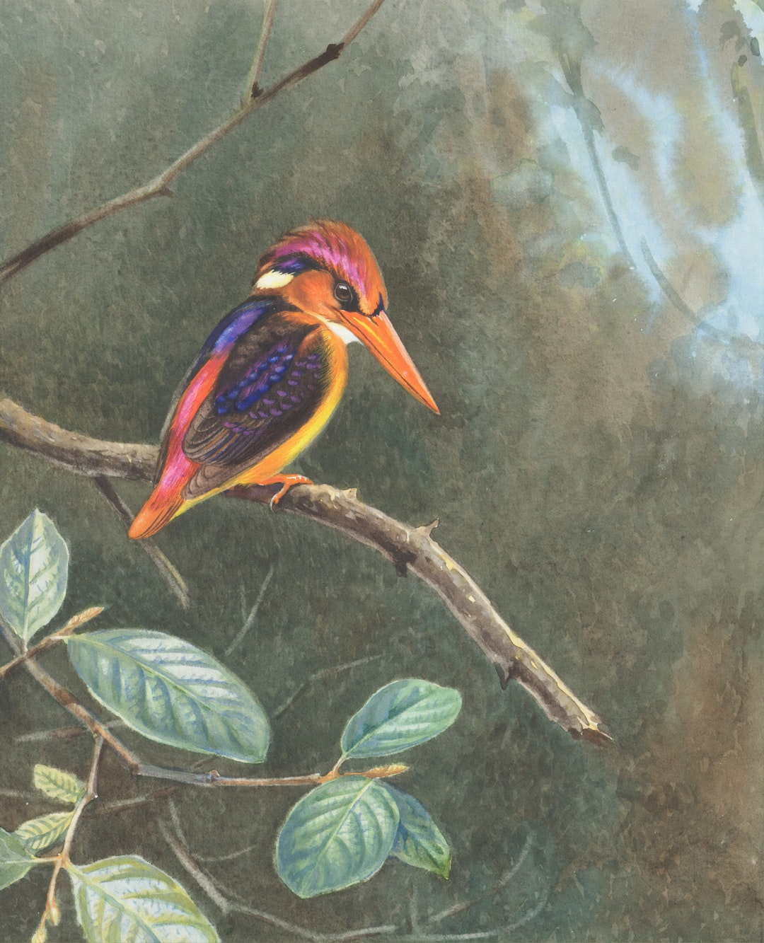 Indian Three-toed Kingfisher.