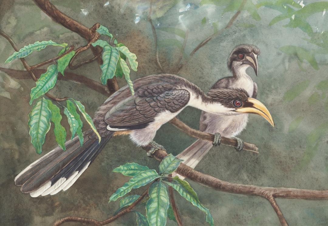 Sri Lanka Grey Hornbill.