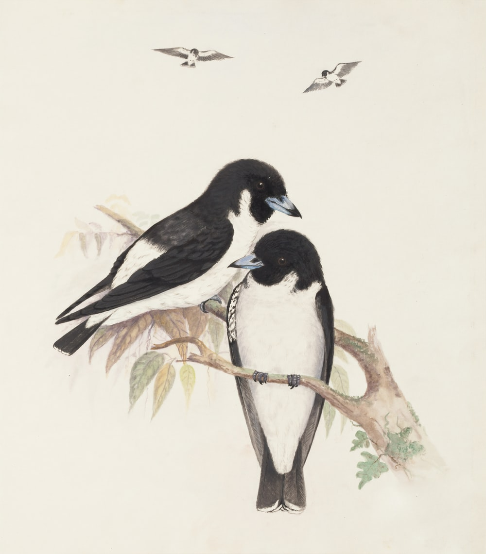 two black-and-white birds perching on tree branch
